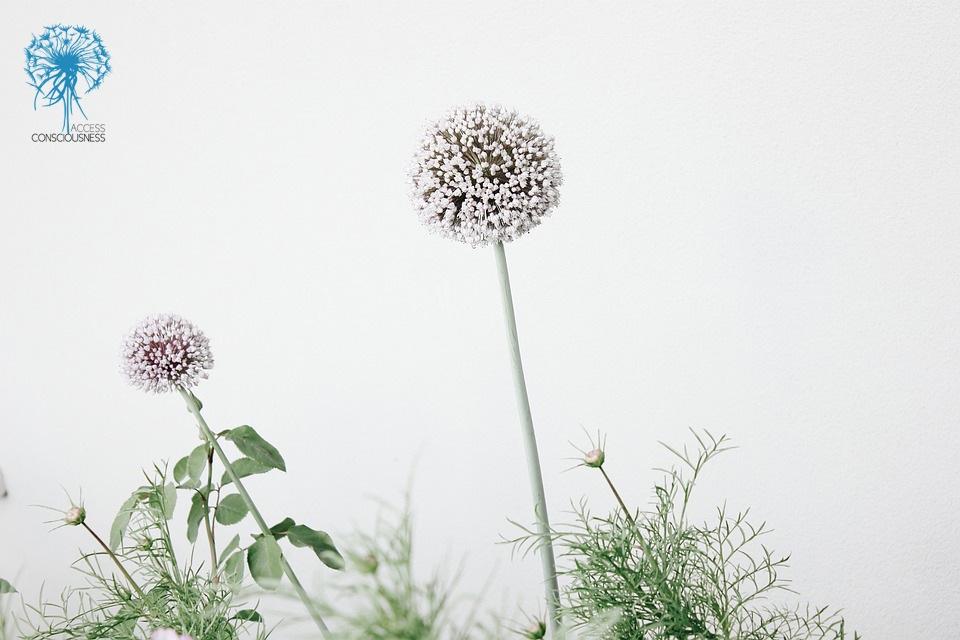 bloom-1851294_960_720 copy