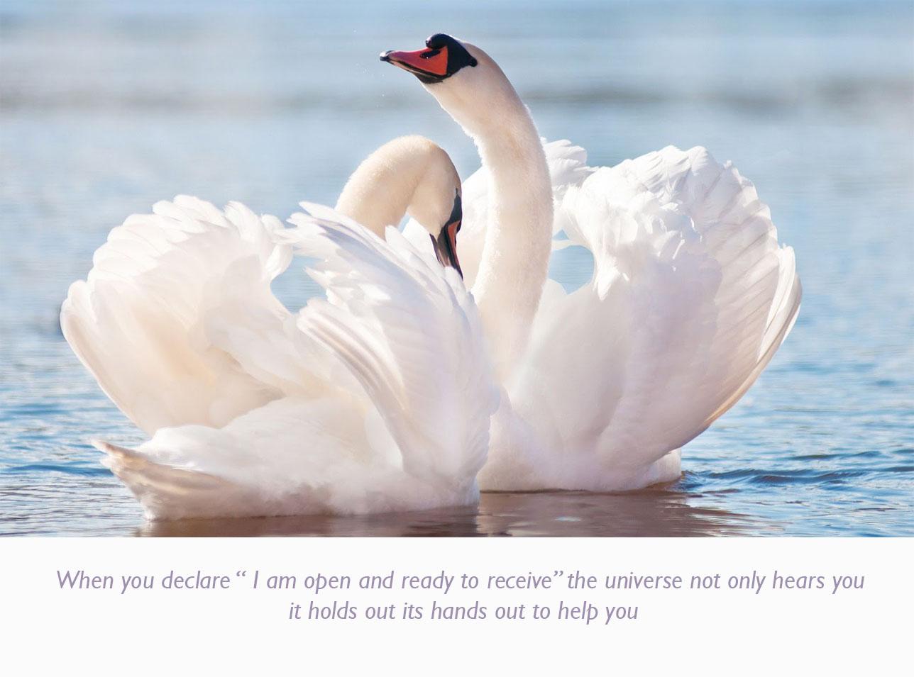 white-swans-lovely-wallpaper copy